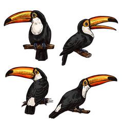 set of exotic bird toucan vector image
