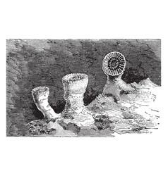 Cup coral vintage vector