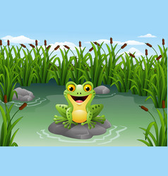 cute frog on the rock vector image