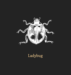 ladybug drawn insect in engraving vector image