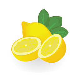 lemons isolated on a white background vector image