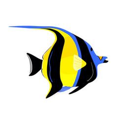 Moorish idol fish zanclus cornutus vector
