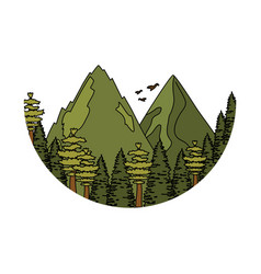 pines trees forest with mountains scene vector image