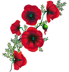 branch of flowers of red poppies vector image