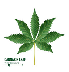 Cannabis leaf green cannabis cannabis vector