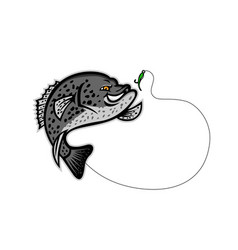 Crappie jumping for a bait mascot vector