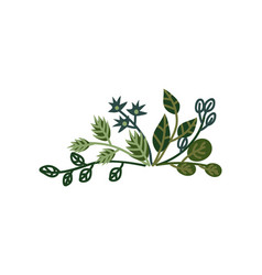 green plant sprigs natural design element can be vector image