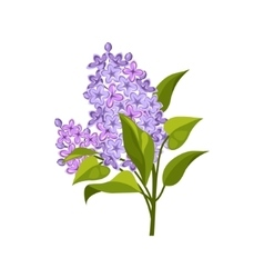 Lilac Hand Drawn Realistic vector image