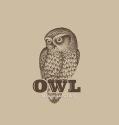 Owl sketch vector