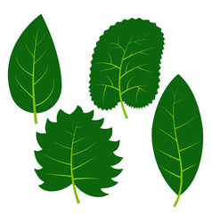 set of four green leaves on white background vector image