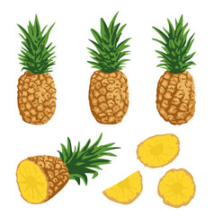 summer set with pineapples isolated on white vector image