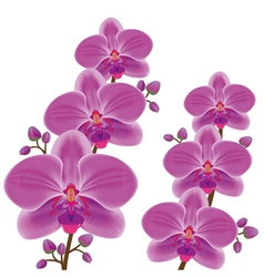Exotic flower orchid vector image vector image