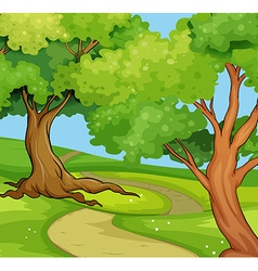 National park scene with big trees vector image