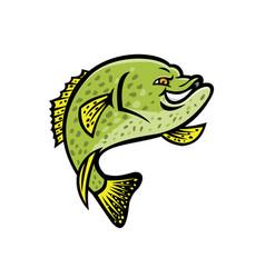 Crappie fish mascot vector