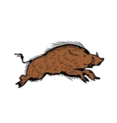 sketch of wild boar running vector image
