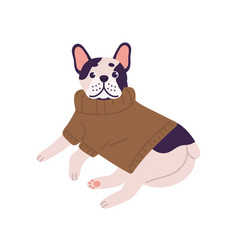 Adorable friendly french bulldog breed wearing vector