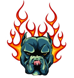Bull dog flame tattoo in beast mode vector