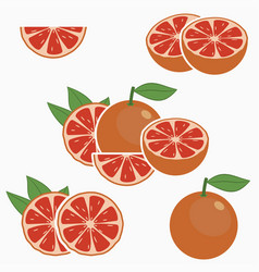 grapefruit citrus fruit vector image