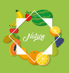 nature fruits frame vector image