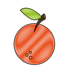orange sweet fruit vector image