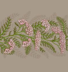 yarrow pattern vector image