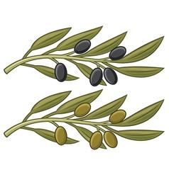 olive branch olive leaf vector image vector image