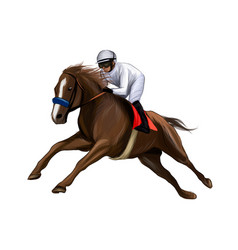 horse racing with a jockey from splash vector image
