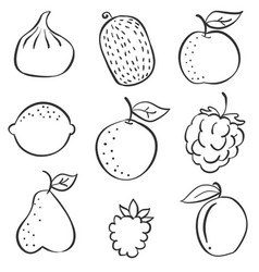 set of fruit fresh hand draw vector image
