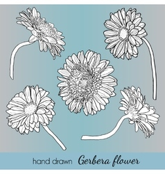 Set of hand drawn gerbera flowers Can use vector image vector image