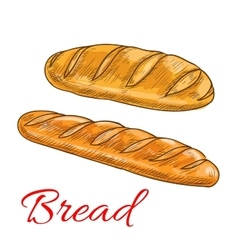 Bread wheat loaf and baguette sketch icons vector image
