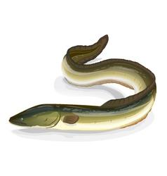 Eel fish vector