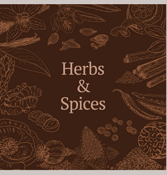 Sketch herbs and spices concept vector