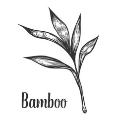 Bamboo Plant vector