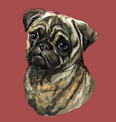 Pug colorful hand drawing portrait vector