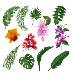 Set of tropical flowers bouquet vector