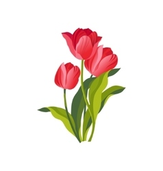 Tulip Hand Drawn Realistic vector image