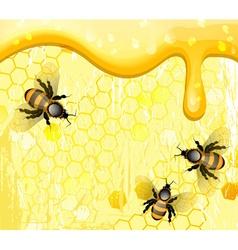 Bees on Honeycomb Cartoon vector image