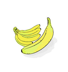 a bunch of ripe yellow bananas still-life from vector image
