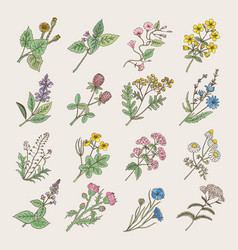botanical herbs and flowers hand drawing pictures vector image