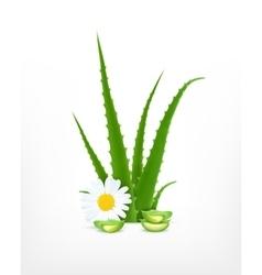 Aloe vera and chamomile vector