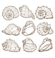 Hand drawing seashell set vector image