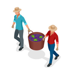 isometric workers harvesting grapes during the vector image vector image