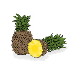 large exotic pineapple still-life from fruit hand vector image