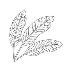 Line beauty feathers style with decoration design vector
