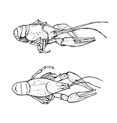 Monochrome sketch of crayfish vector