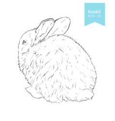 hand drawn with rabbit vector image vector image