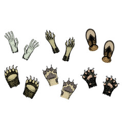 paws of animals or footprints and wildlife hands vector image