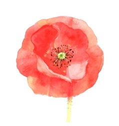 Beautiful red poppy vector