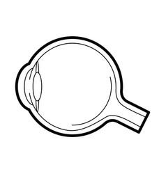 eyeball anatomy icon vector image