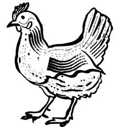 hen engraving vector image